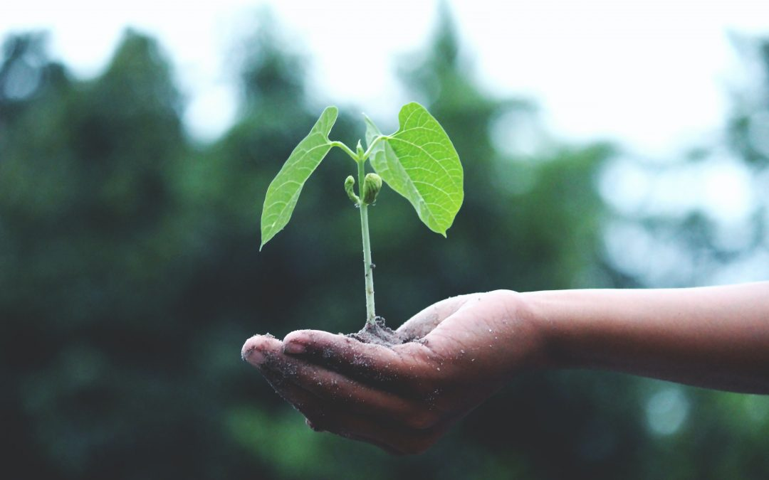 This Earth Day, Plant a Seed!